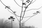 Un árbol emerge de la niebla en Jardim Botanico, en Río de Janeiro, Brasil, 1 de octubre de 2016.