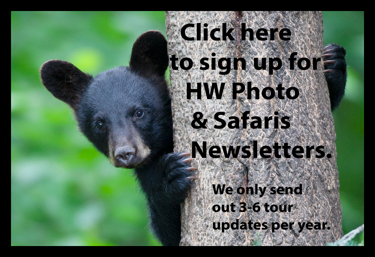 Black Bear Sign Up Newsletter