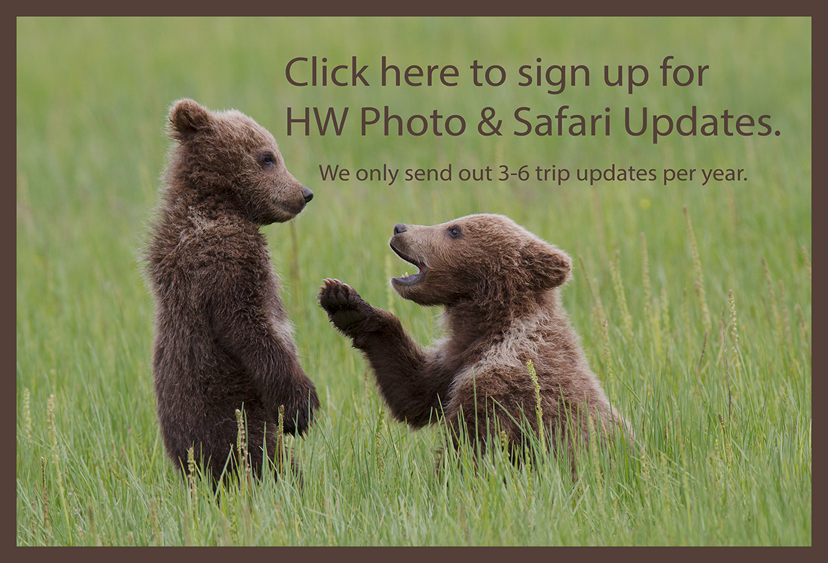 Brown Bear Sign UP Newsletter