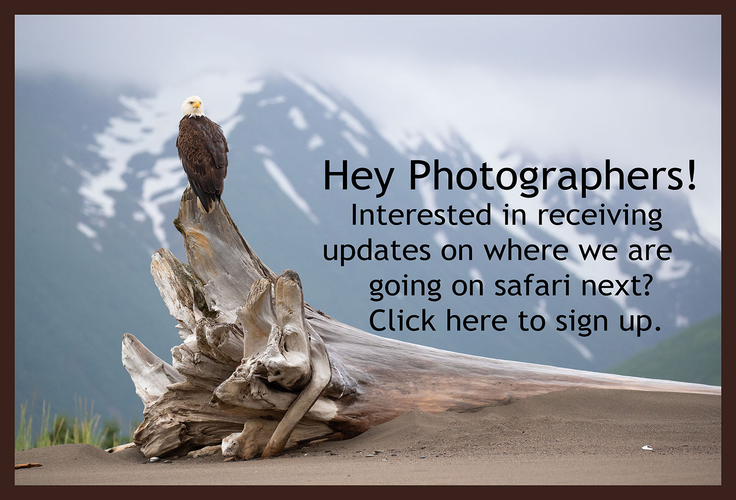 Photographers Newsletter Sign Up