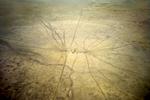 Point d'eau au milieu du désert pour le bétail.Seulement 10 % de la population Australienne habite dans le désert et l'Outback soit deux tiers du territoire. TN, Australie, Octobre 2011.