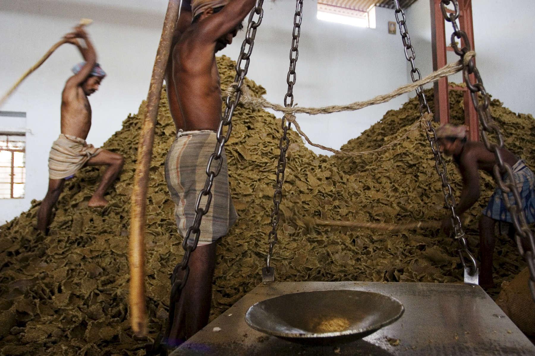 12.21.06 Oil Mills, Hyderabad, Andhra Pradesh, India.Cette usine, achete les graines de coton. Une fois les graines compressees, l'huile (12%) sera rafinee puis vendue sur le marche local comme huile vegtale de cuisine.Ici, la partie dure restante (80 %)  apellee {quote}oil cake{quote}, sera vendu aux fermiers comme aliment pour le betail (vaches, bufles, chevres....).