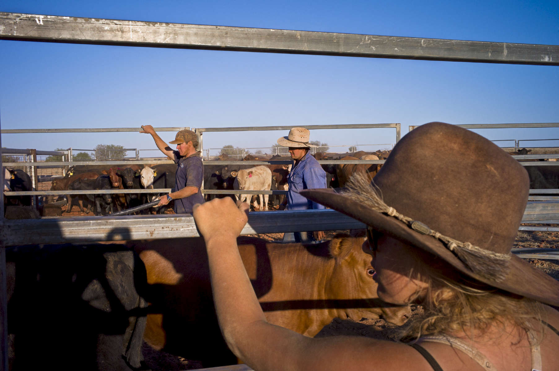 Once the animals are penned, it takes 4 to 5 days to let them through, one by one, to tattoo and vaccinate them and trim their horns before they are loaded for the abattoir or redirected towards another pasture. Cattle spend 4 to 5 years in pasture before they are sent to the abattoir. 2011, Northern Territory, Australia.