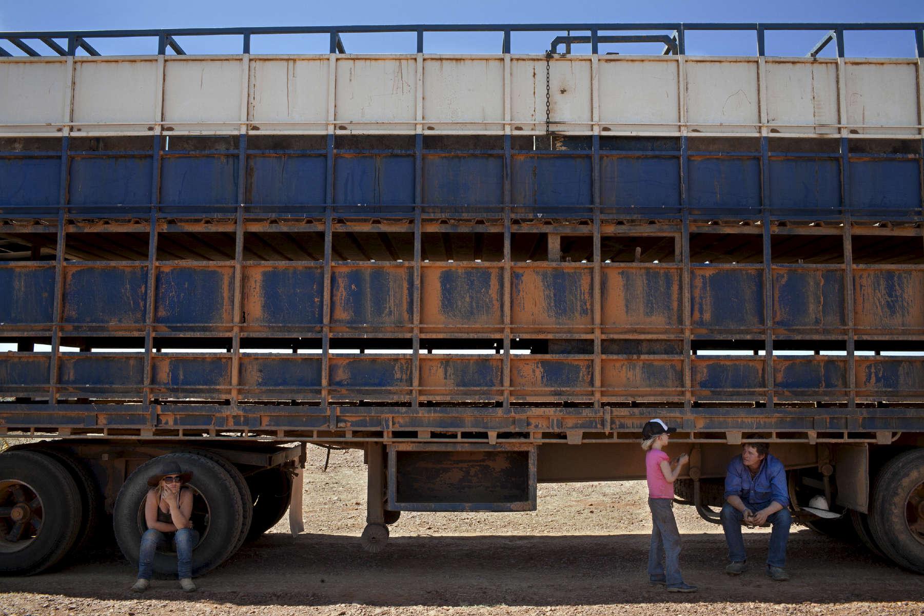 Cassandra, Cassie et Luke se reposent à l'ombre d'un road train. Camion les plus long du monde pouvant atteindre 53 mètres de long.  Le road train va effectuer 3 à 4 voyages par jour et ce pendant 5 jours entre le lieu de parcage et la ferme. A son bord, à chaque voyage, une centaine de bêtes sont réparties sur deux étages. Le prix moyen - selon leur poids - est de 1000 dollars australiens par tête. TN,  Australie, 2011.
