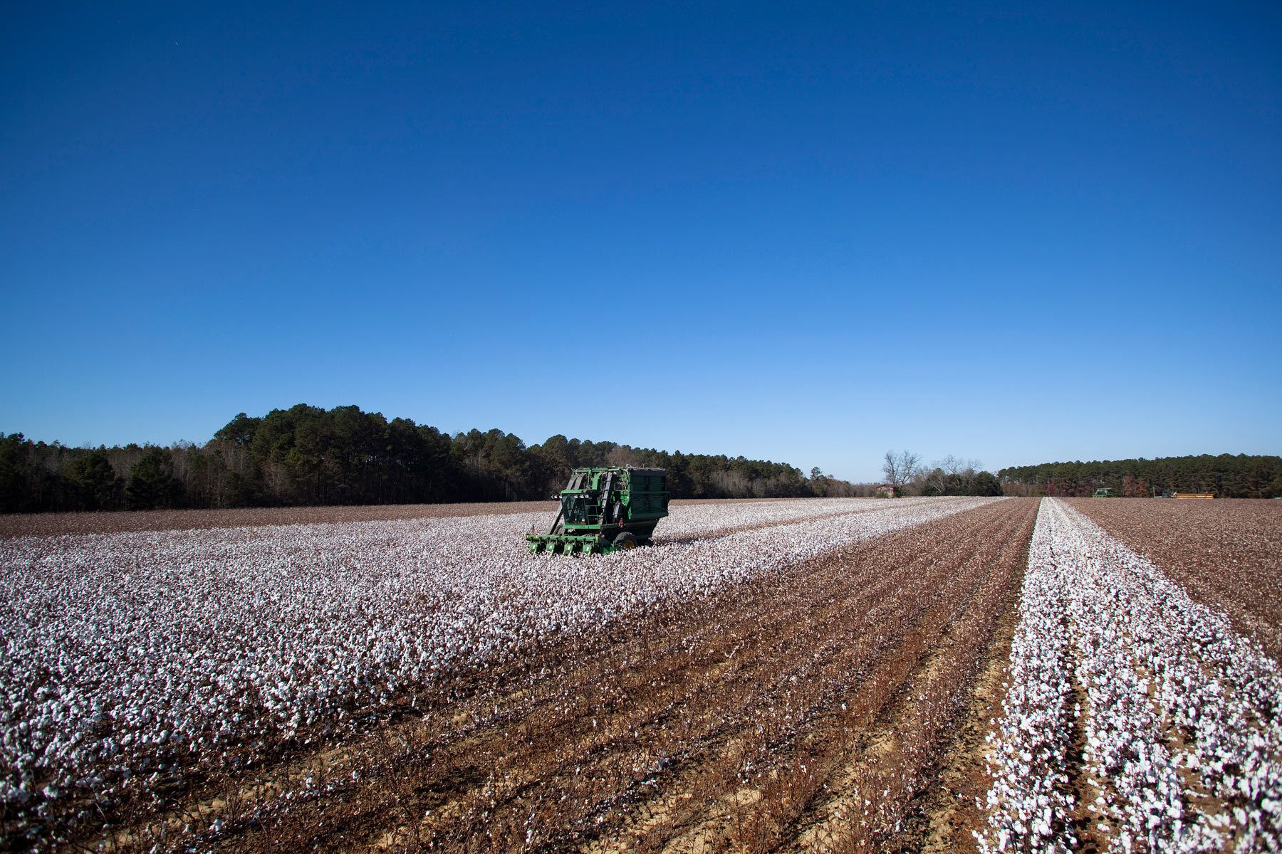 A picker harvests cotton for Baxley & Baxley Farms on a field in Minturn, South Carolina November 24, 2012. The cotton harvest takes place in South Carolina from October through November and is planted and grows along a corridor approximately 30 miles on each side of Interstate I-95. About 80 percent of the cotton harvested by this farm is exported outside the United States. REUTERS/Randall Hill (UNITED STATES)