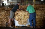 A day before the markets open, tobacco farmer Pressley Johnson (left) and warehouse manager Elton Johnson talk by a bundle of tobacco at the Big L Warehouse in Mullins, South Carolina July 26, 2013. The warehouse is co-owned by farmer Johnny Shelly but leased to the US Tobacco Cooperative during harvest. The cooperative sets the standard for pricing and quality of the farmer's crop. The traditional tobacco harvest requires many labor intensive hours to bring the crop to market, especially with the flue-cured variety prominent in the southern United States. With the growing health concerns with smoking in the US, most farmers use market cooperatives to sell their crop to the growing markets in China. Picture taken on July 26, 2013.   REUTERS/Randall Hill (UNITED STATES)