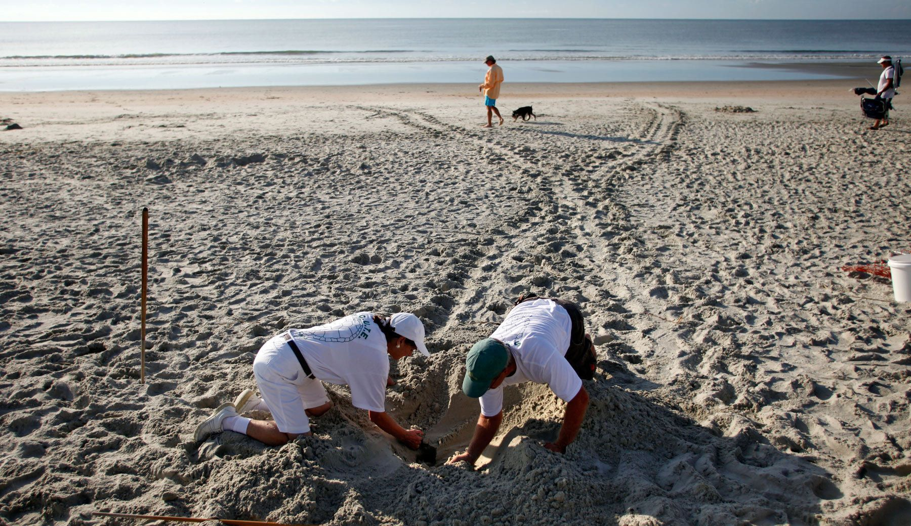 With turtle tracks in the background, volunteer Goffinet McLaren (L) and South Carolina United Turtle Enthusiasts head coordinator, Jeff McClary, check over the location of a freshly laid nest on Litchfield Beach along the coast of South Carolina August 9, 2012.REUTERS/Randall Hill