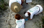 Volunteers take an inventory of turtle eggs hatched from a nest in Litchfield Beach, South Carolina August 16, 2012. The group secures and marks an average of 100 nests during a season that goes from May through October.REUTERS/Randall Hill