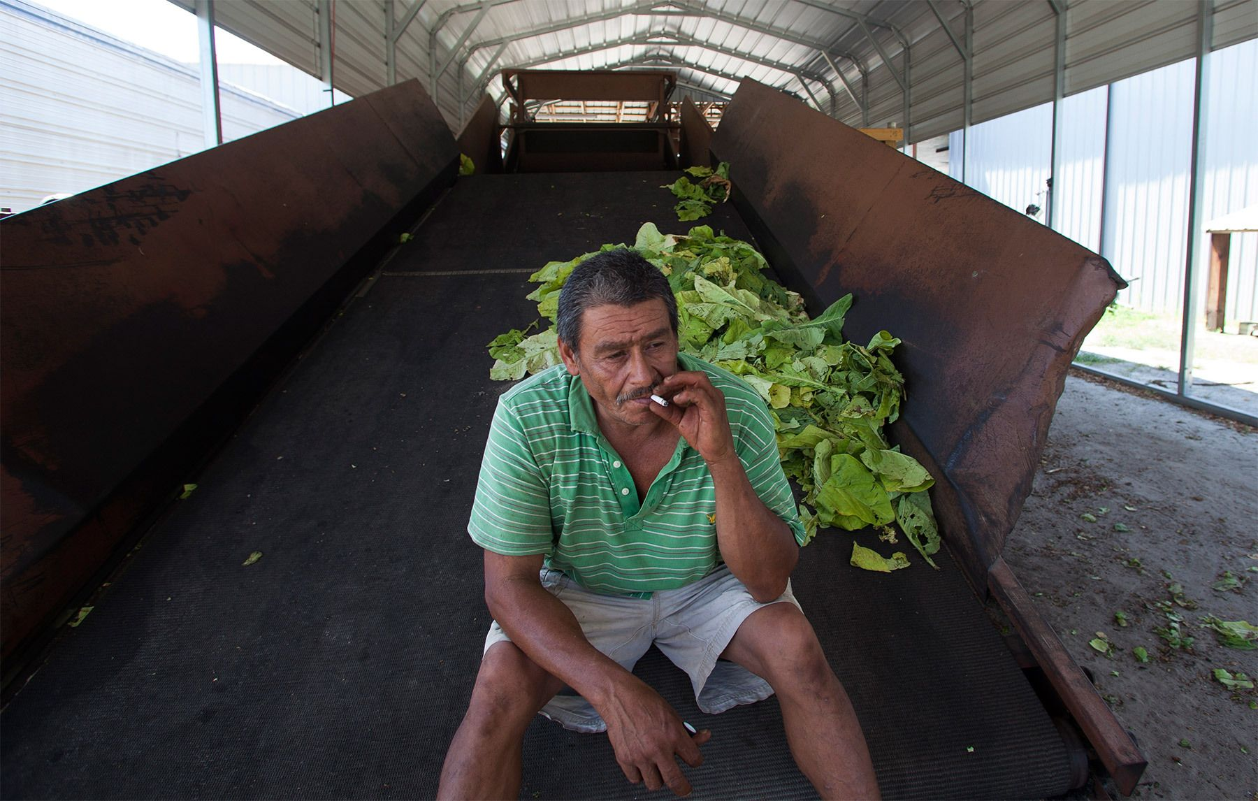 Farm hand Manuel Lopes takes a smoke break at Shelly Farms in the Pleasant View community of Horry County, South Carolina July 26, 2013. The traditional tobacco harvest requires many labor intensive hours to bring the crop to market, especially with the flue-cured variety prominent in the southern United States. With the growing health concerns with smoking in the US, most farmers use market cooperatives to sell their crop to the growing markets in China.      Picture taken on July 26, 2013.   REUTERS/Randall Hill (UNITED STATES)