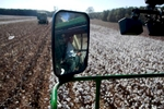 Operator James Grooms is reflected in the mirror of a cotton picker at Baxley & Baxley Farms in Minturn, South Carolina November 24, 2012. The third generation farm, located along South Carolina's cotton corridor, harvested just under 1100 acres of cotton this season. The Baxley family plants several crops but cotton is the cash crop and the most profitable.    REUTERS/Randall Hill (UNITED STATES)