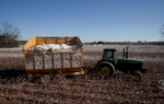 Farm worker Frank Moore operates a cotton transport on the Baxley & Baxley Farm in Minturn, South Carolina November 24, 2012. Moore who is in his 60s, has worked with the Baxley family his entire adult life.   REUTERS/Randall Hill (UNITED STATES)