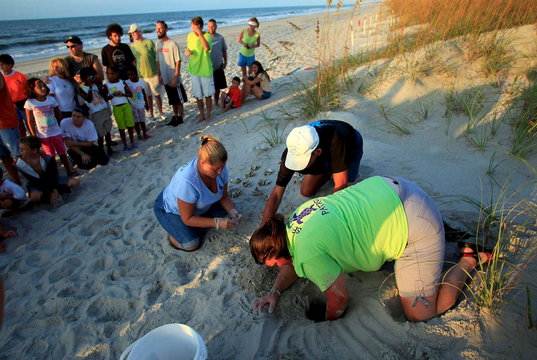 Turtle volunteers Marianne Glaze, from left, Don Pease and Amanda Jenkins take an inventory of a hatched nest August 4, 2012 at Myrtle Beach State Park in Myrtle Beach, South Carolina. Inventories are taken three days after the nests hatch. The empty egg shells are categorized and the information is sent to researchers. On this day, three live turtles remained in the nest unable to get out on their own. They were released to enthusiastic cheers from those gathered to watch the process. Turtle volunteers walk the area's beaches along South Carolina's coast daily during the nesting season, looking for signs of turtle activity and keeping tabs on the progress of the endangered species of turtles that lay their eggs along the coast.     REUTERS/Randall Hill  (UNITED STATES)