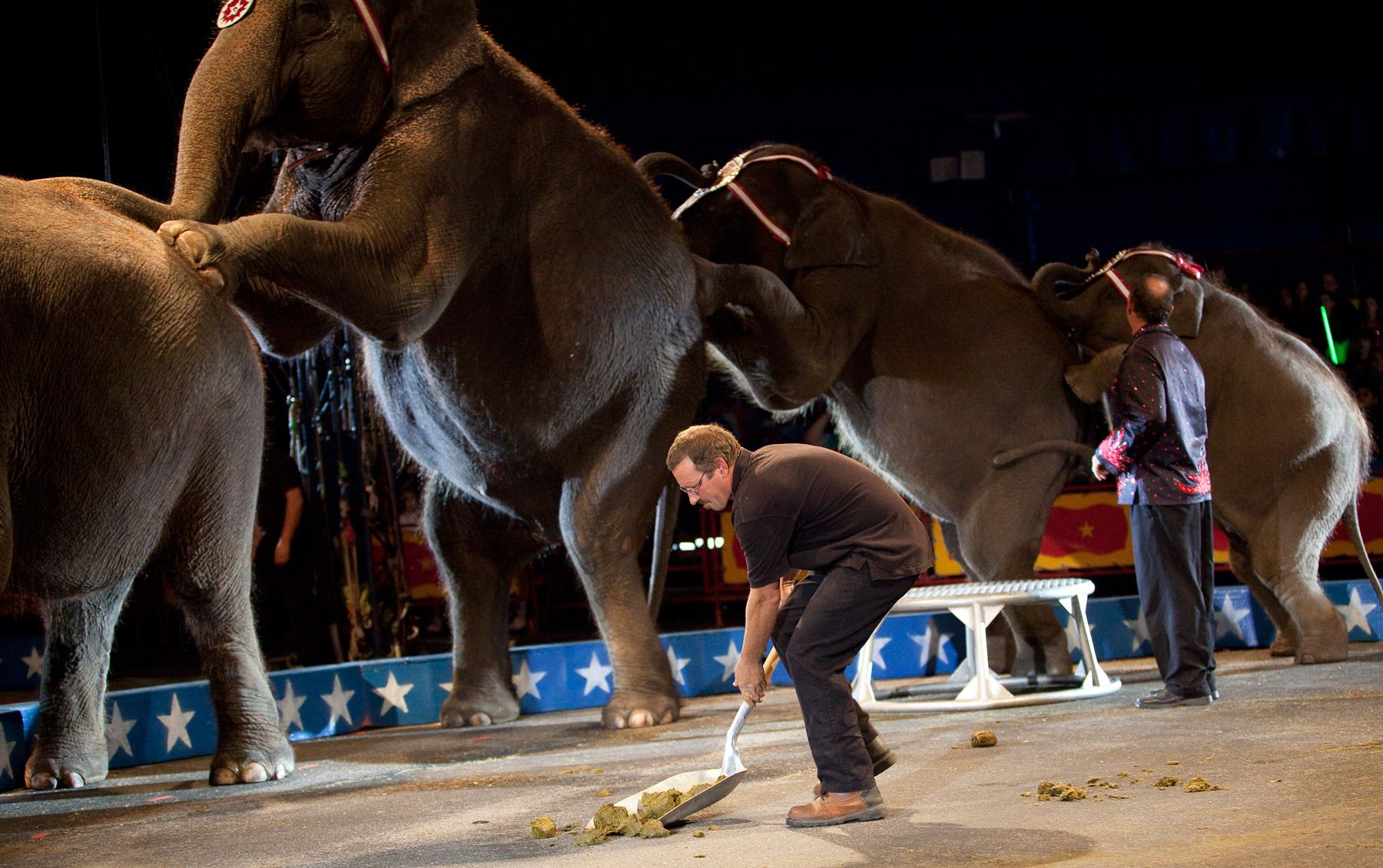 Danny McRoberts of Augusta, Georgia, performs one of his tasks as an animal handler during a Cole Brother Circus of the Stars show in Myrtle Beach, South Carolina March 31, 2013. Traveling circuses such as the Cole Brothers Circus of the Stars, complete with it's traveling big top tent, set up their tent city in smaller markets all along the East Coast of the United States as they aim to bring the circus to rural areas. The Cole Brothers Circus, now in its 129th edition, travels to 100 cities in 20-25 states and stages 250 shows a year.   REUTERS/Randall Hill
