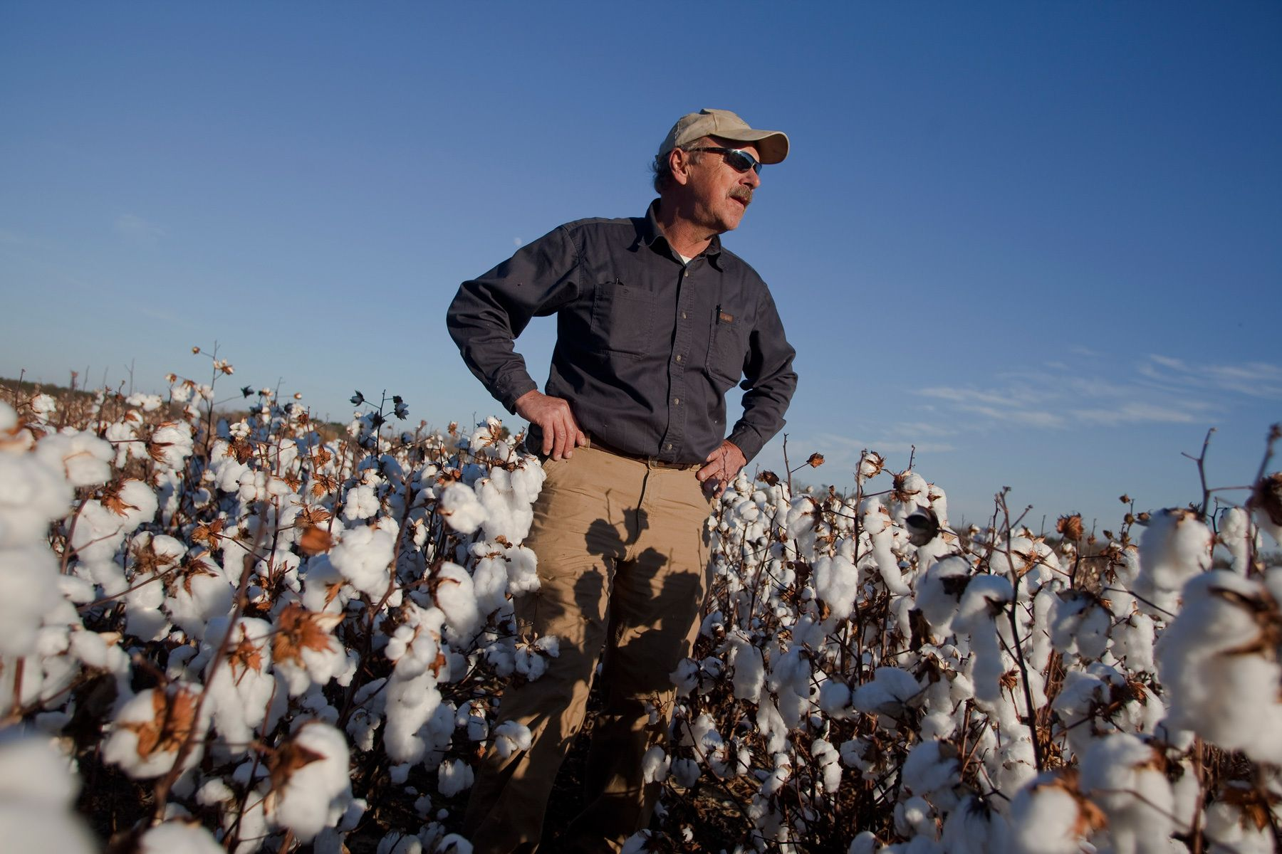 Farmer Roy Baxley, Jr. watches over the cotton harvest as he stands in a field of cotton in Minturn, South Carolina November 24, 2012. At the age of 18, Baxley took over the family farm after his father died from a sudden heart attack. He was forced to leave college and change the direction of his life or liquify the family farm.  REUTERS/Randall Hill (UNITED STATES)