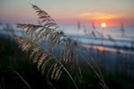The sun pops above the edge of the ocean illuminating sea oaks along the dunes at Myrtle Beach State Park.
