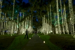 Light curtains hang from the 250 year-old trees at Live Oak Allee during the annual Nights of a Thousand Candles at Brookgreen Gardens in Murrells Inlet.