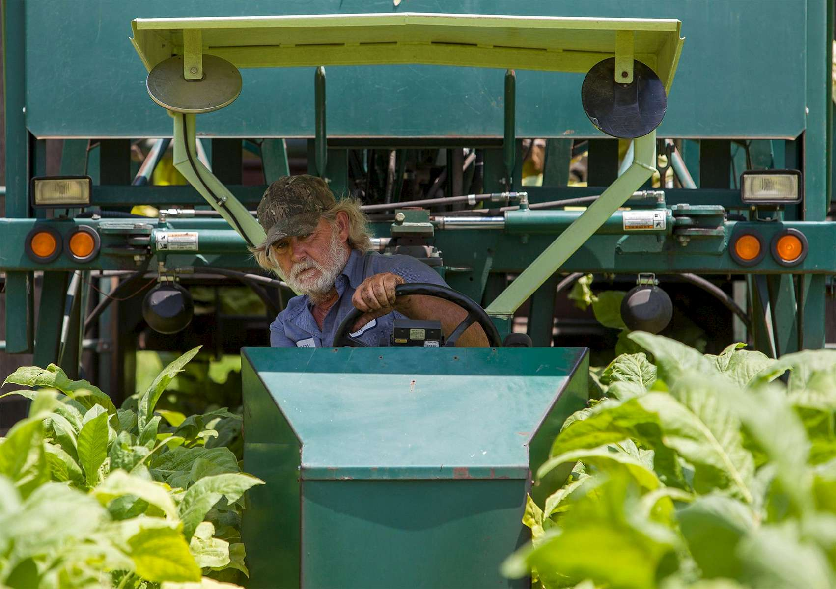 Lester {quote}Buddy{quote} Stroud, a farm hand at Shelley Farms, operates a tobacco harvester at Shelley Farms in the Pleasant View community of Horry County, South Carolina July 26, 2013. The traditional tobacco harvest requires many labor intensive hours to bring the crop to market, especially with the flue-cured variety prominent in the southern United States. With the growing health concerns with smoking in the US, most farmers use market cooperatives to sell their crop to the growing markets in China.      Picture taken on July 26, 2013.   REUTERS/Randall Hill (UNITED STATES)